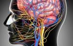 Как и где делают УЗИ нервов, что показывает и как расшифровать протокол правильно