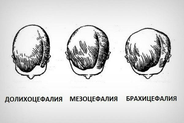 Мезоцефалическая форма черепа